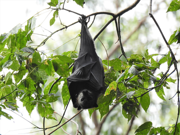 Hang out and watch the flying foxes | AlburyCity