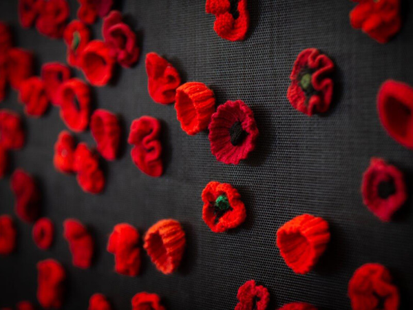 Red Poppies conserved for future generations | AlburyCity